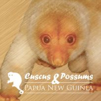 Cuscus & Possums - Papua New Guinea
