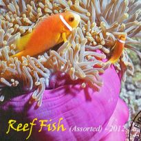 Reef Fish (Assorted 2012)