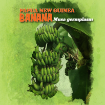 EDIBLE PLANTS - BANANA