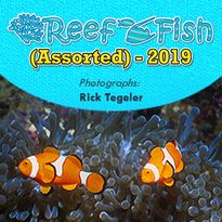 Reef Fish (Assorted #2) - 2019
