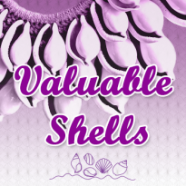 VALUABLE SHELLS